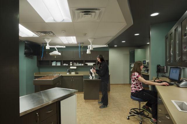 Veterinary Hospital Surgery Room