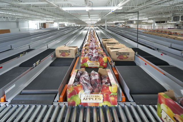 Packaged apples on conveyer belt